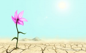 flower_in_a_desert_by_tsitra360-d2xw8mg